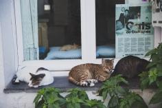 Dali's cats